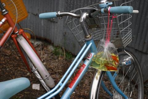 金魚はとりあえず自転車に