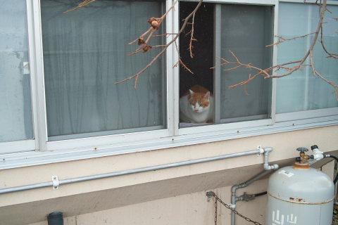 窓からにゃんこ