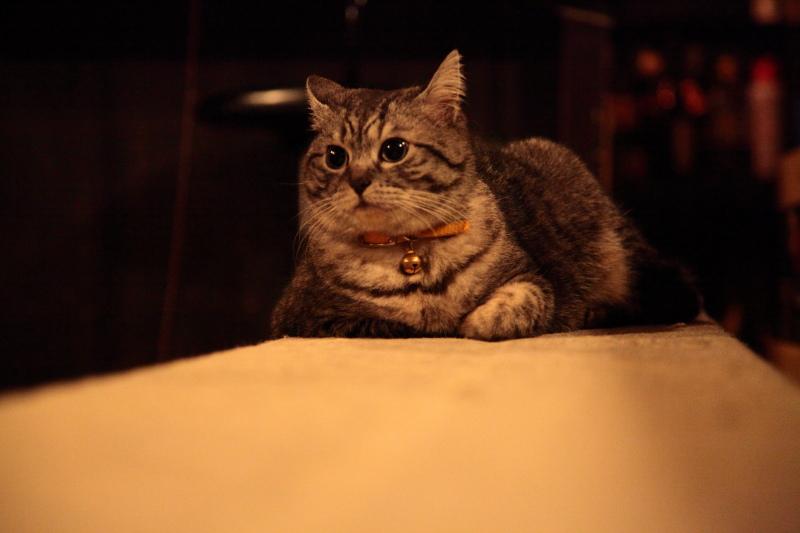 上海の猫 ちゃーはん