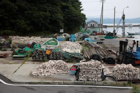 牡蠣の貝殻がこれでもかと沢山つまれています。