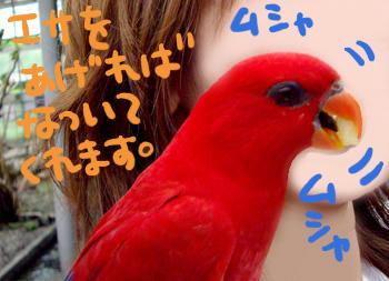 sizu005.jpg