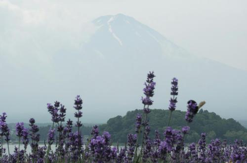 fuji5ko_02.jpg