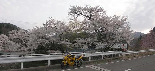 hanamiyama_06.jpg