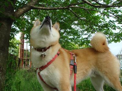 葉桜!・・・きれいだな!
