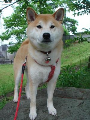 真面目な顔の幸太郎です!