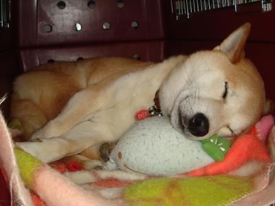 お昼寝中の幸太郎です!