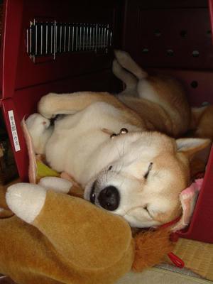 寝顔も可愛い幸太郎です!