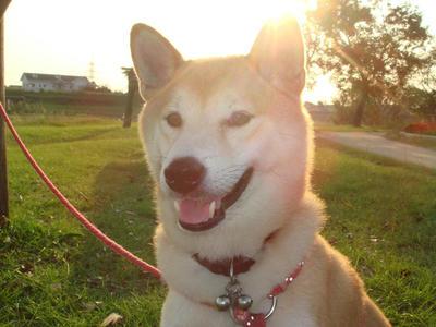 夕陽を浴びている幸太郎です!