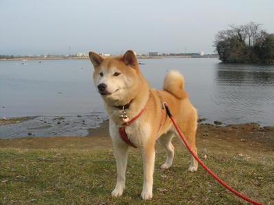 江津湖がきれいです!