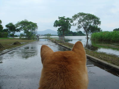凄い雨でした!