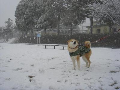 初めての雪!