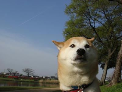 飛行機雲!!
