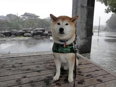 まとまった?雨!