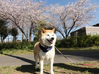連日の好天気!