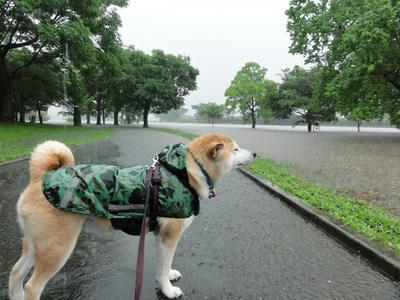 大雨洪水警報!