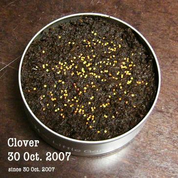 クローバー071030