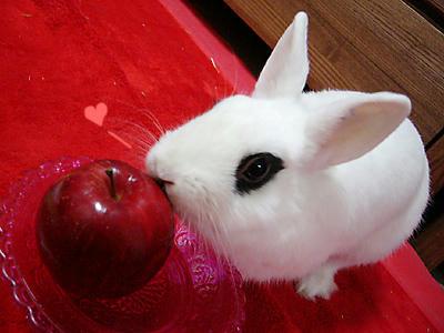 リンゴにチュッ