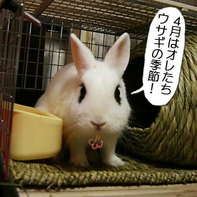 ウサギの季節
