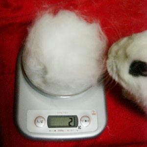 2グラムの兎毛