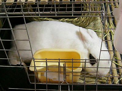 器用に横たわるウサギ