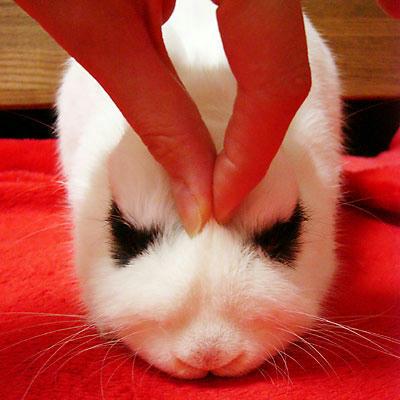 こわい顔のウサギ