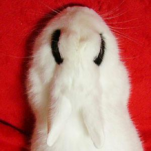 こわい顔のウサギ3
