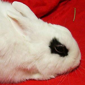 こわい顔のウサギ2