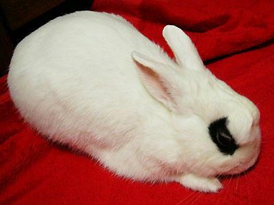 こわい顔のウサギ4