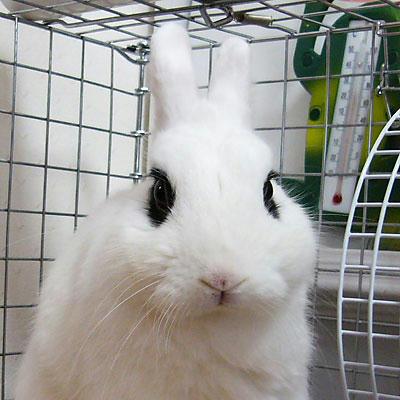 ウサギの口吻