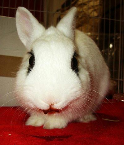 人喰いウサギ