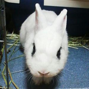 険悪ウサギ