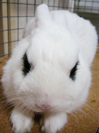 眠りウサギ