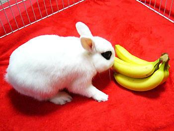バナナだー!!