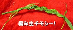 編み生チモシー