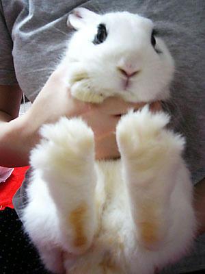 寝小便ウサギ