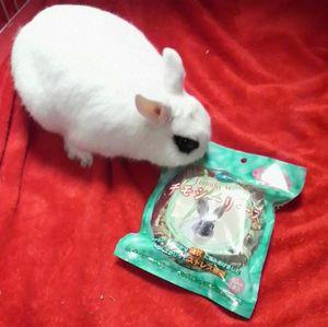 ウサギ用クリスマスリース