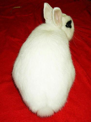 なにみるウサギ