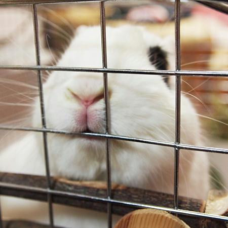 ウサギは歯が命