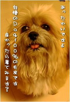 Dog100%②