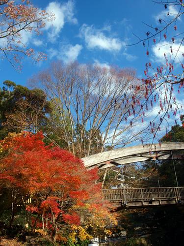 天城湯ヶ島 女橋の紅葉