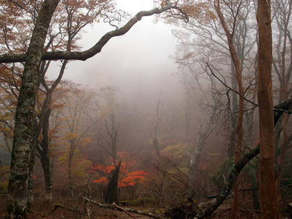 伊豆市 天城山の紅葉