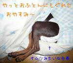 2008_10110004-2.JPG