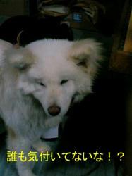 100111_0027~01.JPG