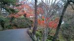 千秋公園図書館側付近