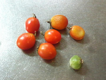 落下トマト2
