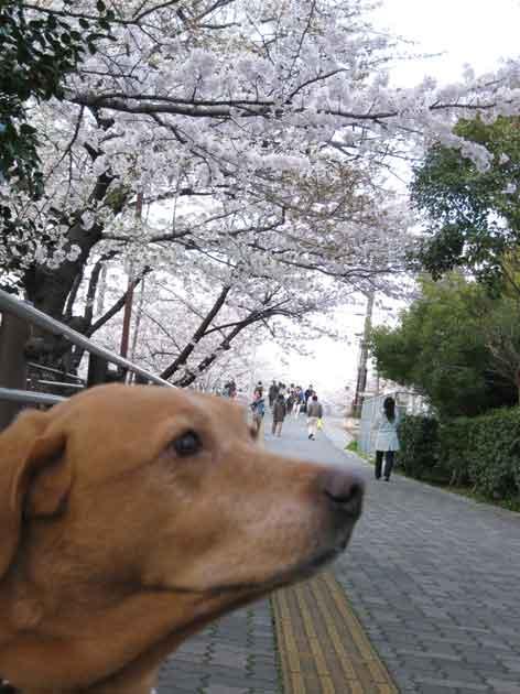 20120407yamasakigawa01.jpg