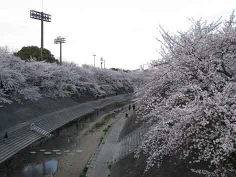 20120407yamasakigawa02.jpg