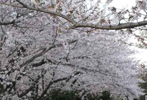 20120407yamasakigawa03.jpg