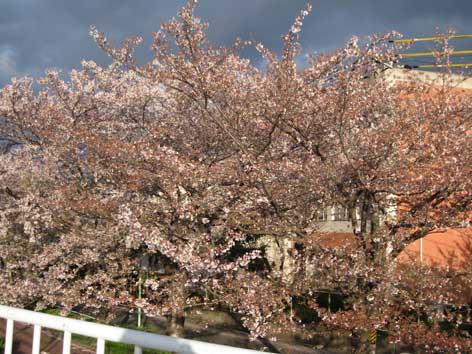 20120414tenpakugawa.jpg