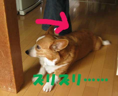 20120531zuruzuru.jpg